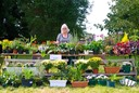 Longworth Fete Plant Stall